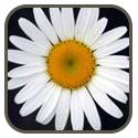 flower-quiz